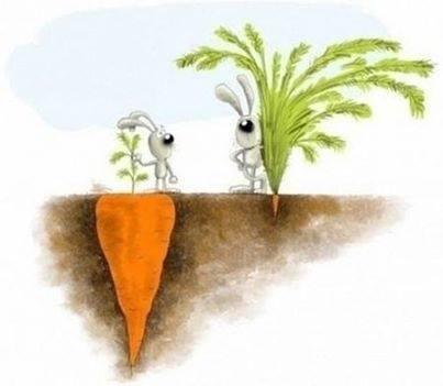 deep roots sweet fruit